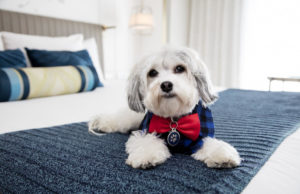Hotel Lafayette Pet Friendly