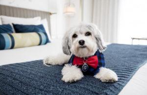 Hotel Lafayette Pet Friendly